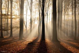 20 fotolocaties om de herfst te fotograferen in Nederland en België