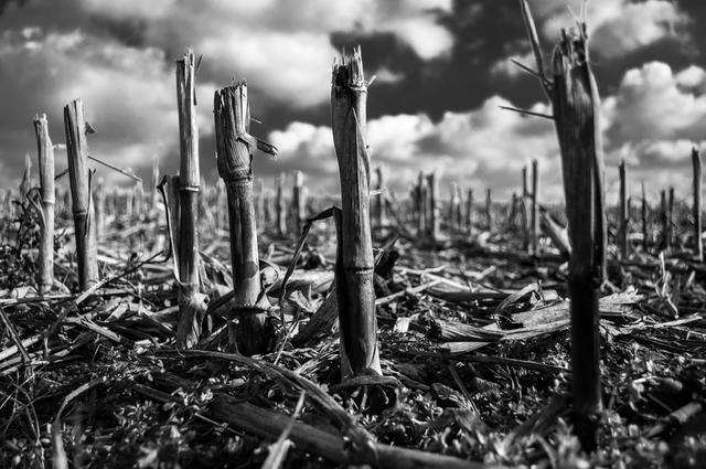 Beste zwart-witfoto's - De oogst is binnen