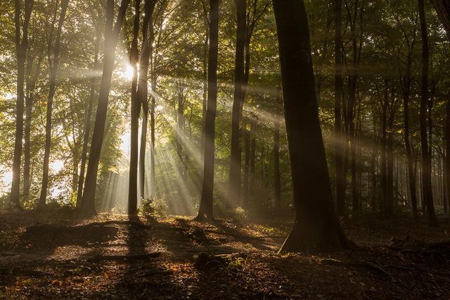Beste weerfoto's: stralen in het bos