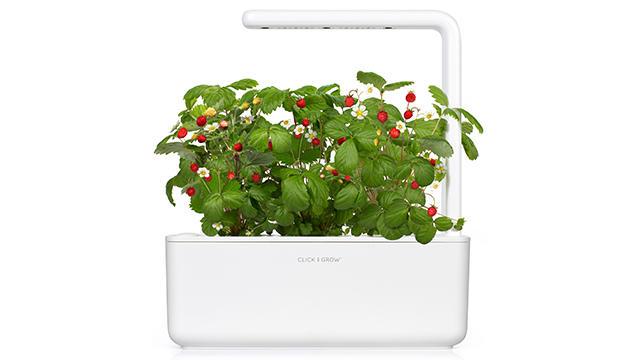 Smart Garden 3 review