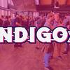 Indigo 2019