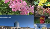 Het vernieuwde Foto's in macOS Catalina