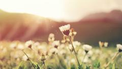 bloemen in weide