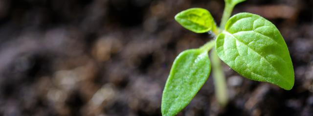plant aarde groen